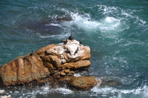 Cormorants sunning on rocks.
