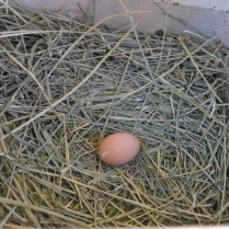 Our first egg!