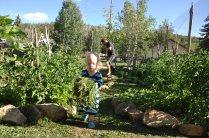 Helping Papa in the veggie garden