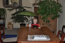 This is one of our frequent views: Mia snacking at the table while we are working in the kitchen.