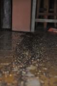 Ant level