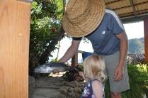 She wanted to help Papa fillet the bonita.