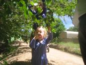 Harvesting mulberries along the acequias (irrigation canals) and ditches.