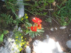 Lovely red flowers