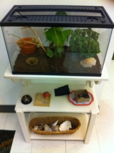 Terrarium and other materials in Primary class