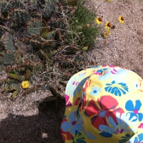 Observing the bee in the prickly pear flower