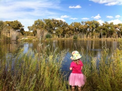 Tossing 4-winged salt bush leaves into the pond