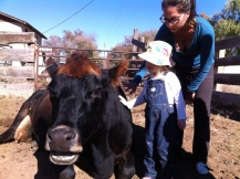 Meeting the cows that give us milk