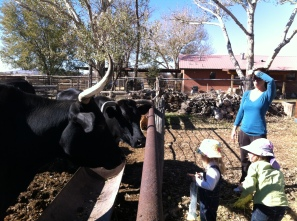 Look at the cows!